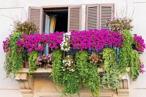Balkon s bohatě kvetoucími rostlinami.