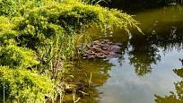 Způsobů jak zadržet na zahradě dešťovou vodu je mnoho.