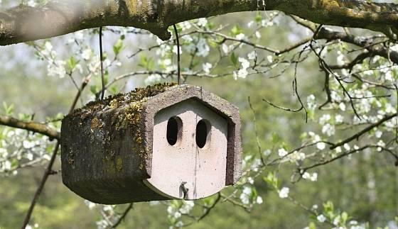 Dřevocementová budka bezpečně zavěšená na větvi