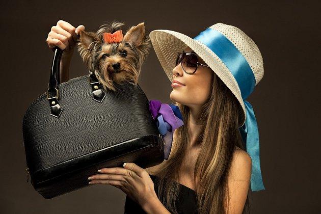 Psa bychom nikdy neměli vybírat jako doplněk oblečení.
