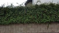 Robustní tvárnice masivního plotu zjemní zeleň