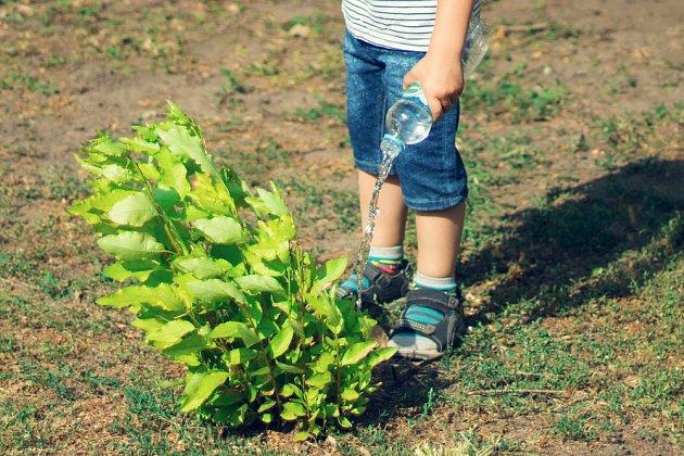 Rostliny, které dostávají perlivou vodu, rostou rychleji.