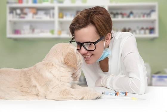 Z čipování psa nemusíte mít strach ani vy, ani váš domácí mazlíček.