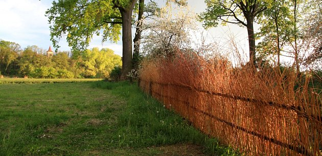 Ploty z proutí jsou ideální pro přírodní a venkovské zahrady, ale nejen pro ně