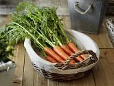 Kdo by netoužil po vlastní sklizni kvalitní a chutné zeleniny