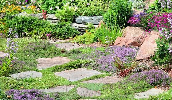 Kvetoucí dlažba, atraktivní prvek zahrady.