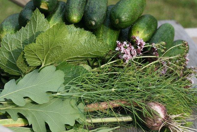 Do láku na okurky můžete vkládat rozličné ingredience, bylinky i listy