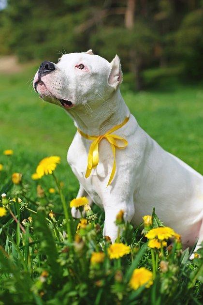 Psa se žlutou stužkou nekontaktujte, nikdy nevíte, čím si prošel
