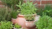 Bylinky můžeme pěstovat i ve velkých nádobách s otvory.