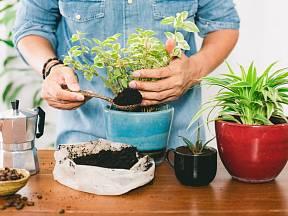 Kávová sedlina je perfektní hnojivo