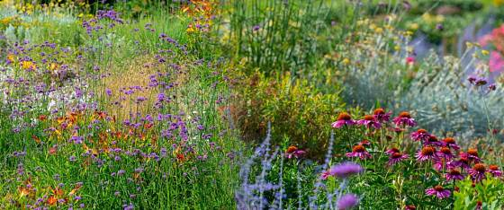 trvalkové výsadby jsou základem krásné zahrady plné života