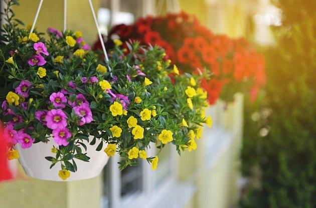 Samozavlažovací závěsné žardinky usnadní péči o květiny