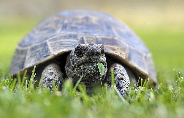 V léte želvy ocení travnatý výběh