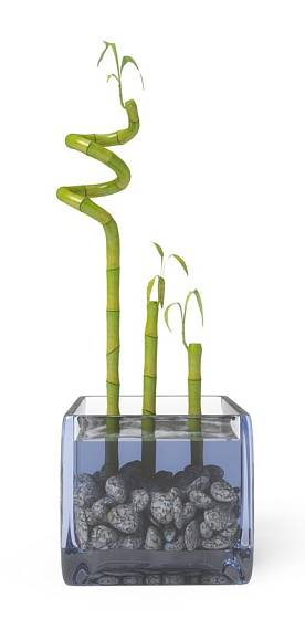 Nádobu vyplňte oblázky, které udrží stonky vzpřímené