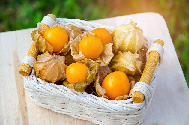 plody mochyně perunánské