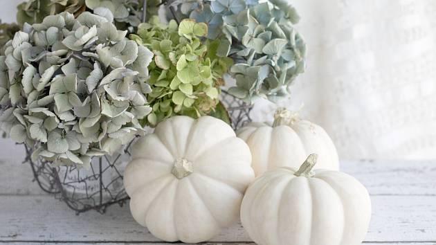 Květy hortenzie mohou váš domov zdobit ještě dlouho po odkvětu.