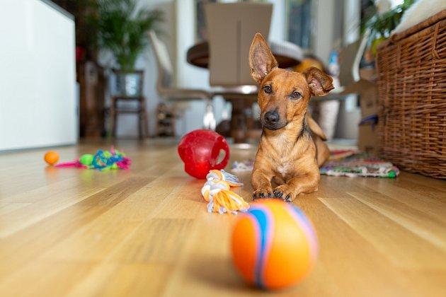 Pořiďte svému psovi pár vhodných hraček, aby se nenudil.