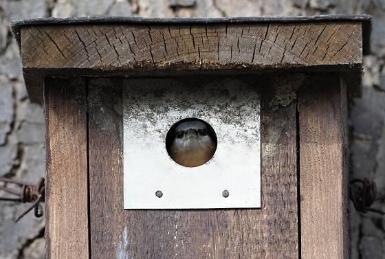 Detail oplechování vletového otvoru. Budka brhlíka lesního.