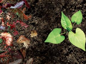 Mít na zahrádce kompost je důležité