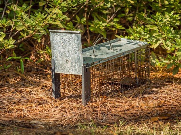 Na odchyt kuny se někdy používají i živolovné pasti.