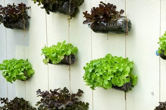 Na pěstování se dají využít staré plastové lahve