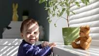 Do blízkosti malých dětí patří jen určité druhy nejedovatých pokojových rostlin.