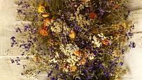 Slaměnky pokvetou i v tmavém koutě