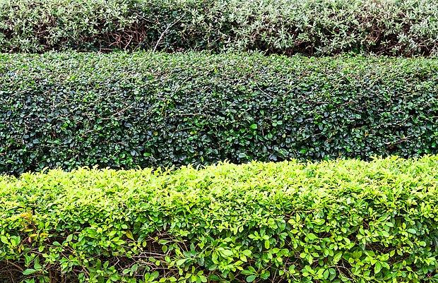 I zeleň má mnoho odstínů