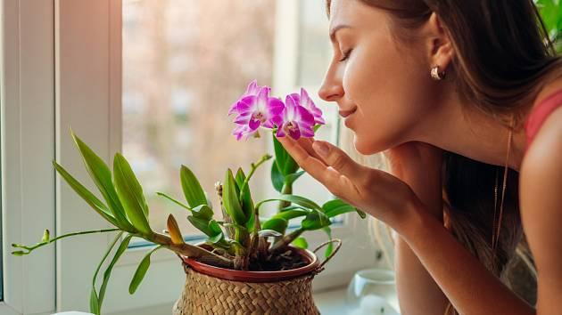 Chcete urychlit růst a kvetení orchidejí?