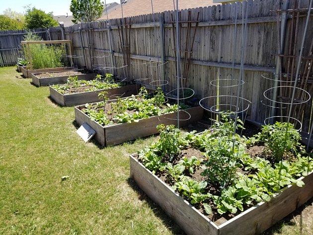 Zeleninový záhon se dá založit přímo na trávníku.