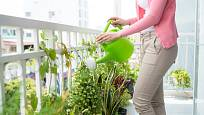 V létě potřebují vaše balkonové rostliny vydatnější zálivku.