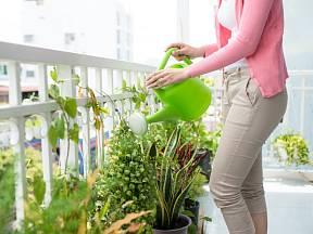 Na to, aby se od jara balkon zase zelenal, myslíme už nyní na podzim.
