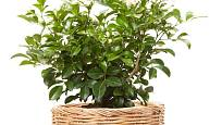 Do košíků můžeme ukládat i pokojové rostliny. Případně se pak dají využít jako dárky.