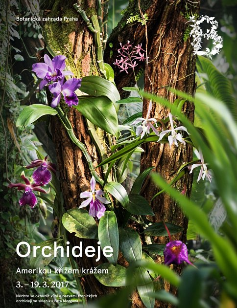 Plakát zvoucí na letošní výstavu orchidejí.