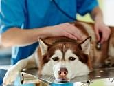 Pes, který pozřel jedovatou návnadu bude malátný a celkově změní své chování.