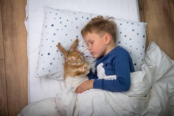 Děti si rády hrají i s živými králíky.