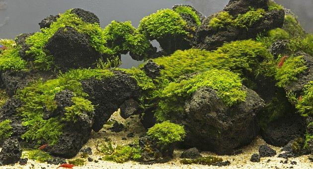 Krajina v akváriu