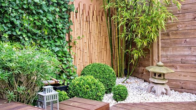 Bambus v japonské zahradě.