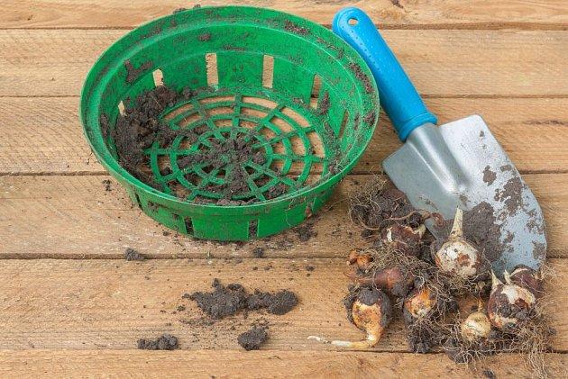 Košíky na pěstování cibulovin sklizeň usnadní