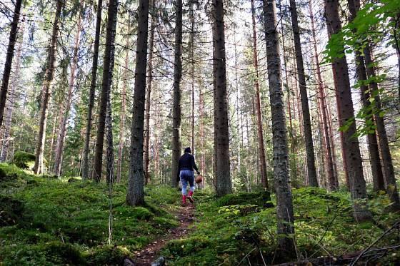 Žádný houbař nechce přijít z lesa s prázdnou