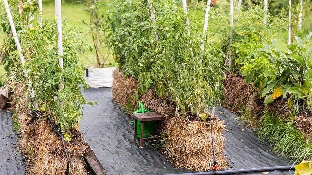 Pěstování zeleniny v balících slámy je jednoduché a vysoce efektivní