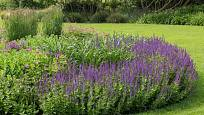 Šalvěj (Salvia x sylvestris) nadělá v zahradě spoustu parády.