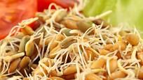 Naklíčené luštěniny obohatí saláty