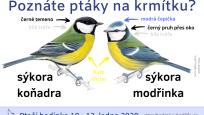 Pomocí jednoduchých výukových materiálů se účastníci programu naučí určovat a rozlišovat nejběžnější ptačí druhy na krmítku, například sýkory.