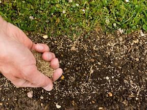 Před samotným výsevem musíme plochu pro trávník důkladně připravit.