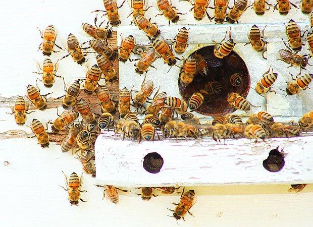 Včely nás stále mají čím překvapit