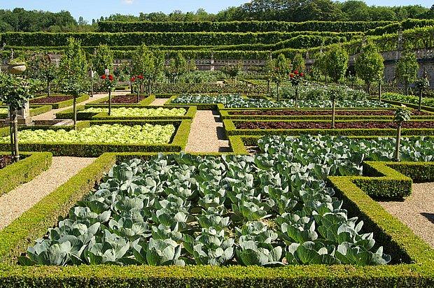zelenina ve formální zahradě