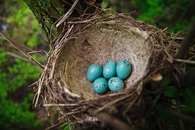 hnízdo drozda je umělěcký výtvor