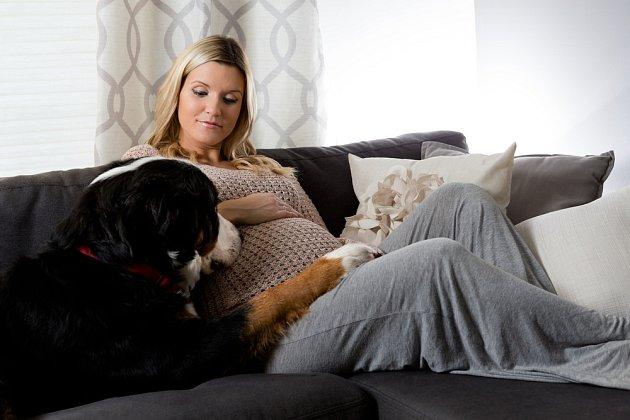 O těhotenství své paničky vědí psi často dřív než ona sama.
