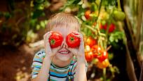 Velká úroda rajčat je důvod k radosti